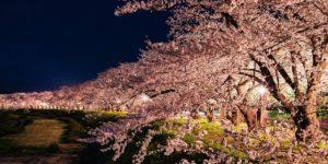 絶景!ドローンで空撮された桜を見てみよう!