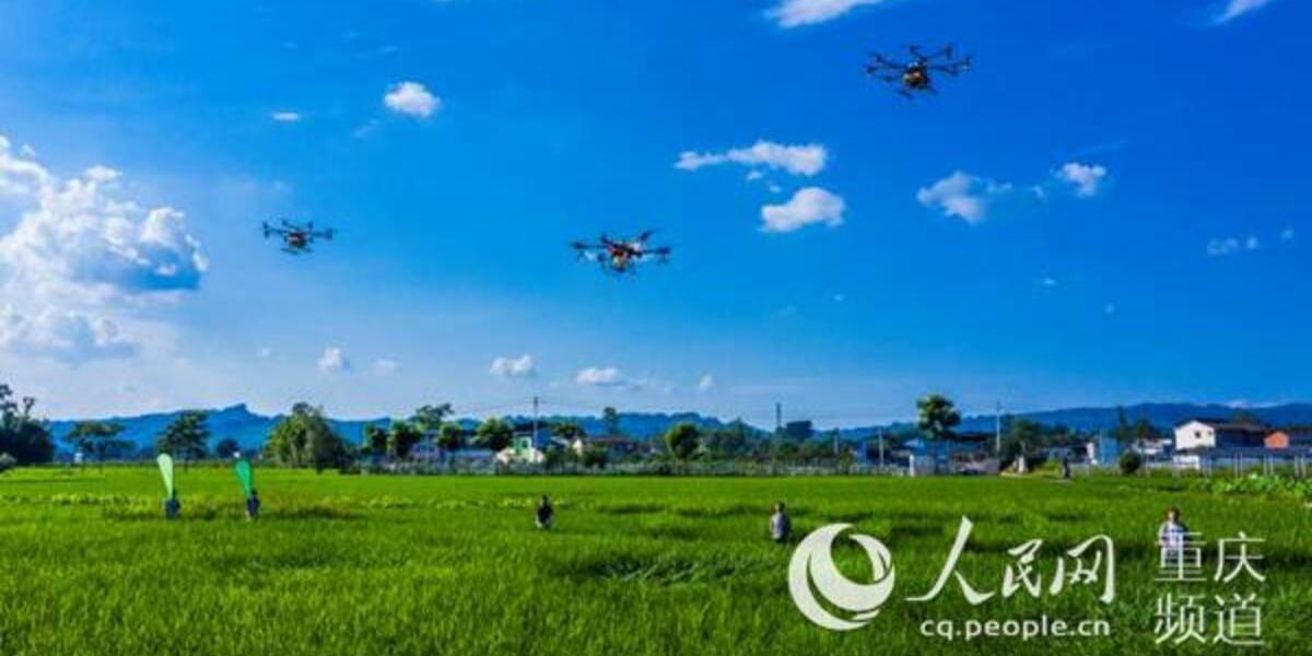 中国の重慶市でドローンによる大々的な農薬散布が行われる
