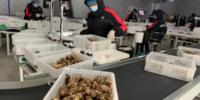 中国の『松茸の里 甘孜(カンゼ)』では、松茸をドローンで輸送!収穫から24時間で食卓へ