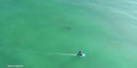 ドローンがサーファーとサメを捕捉!その結末は・・・