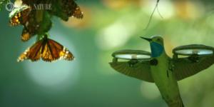 ハチドリ型のドローンが5億羽の蝶の群れを撮影 最後は一斉に羽ばたく姿も