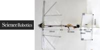 翼を羽ばかせる鳥型ドローン「Ornithopters」を開発 – ScienceRobotics