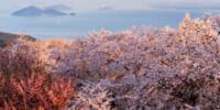 3/27「オンラインお花見大会 桜ドローンプロジェクト2021」開催