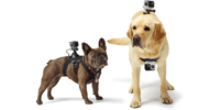 わんちゃん目線の撮影をしよう!GoProのおすすめペットマウント5選